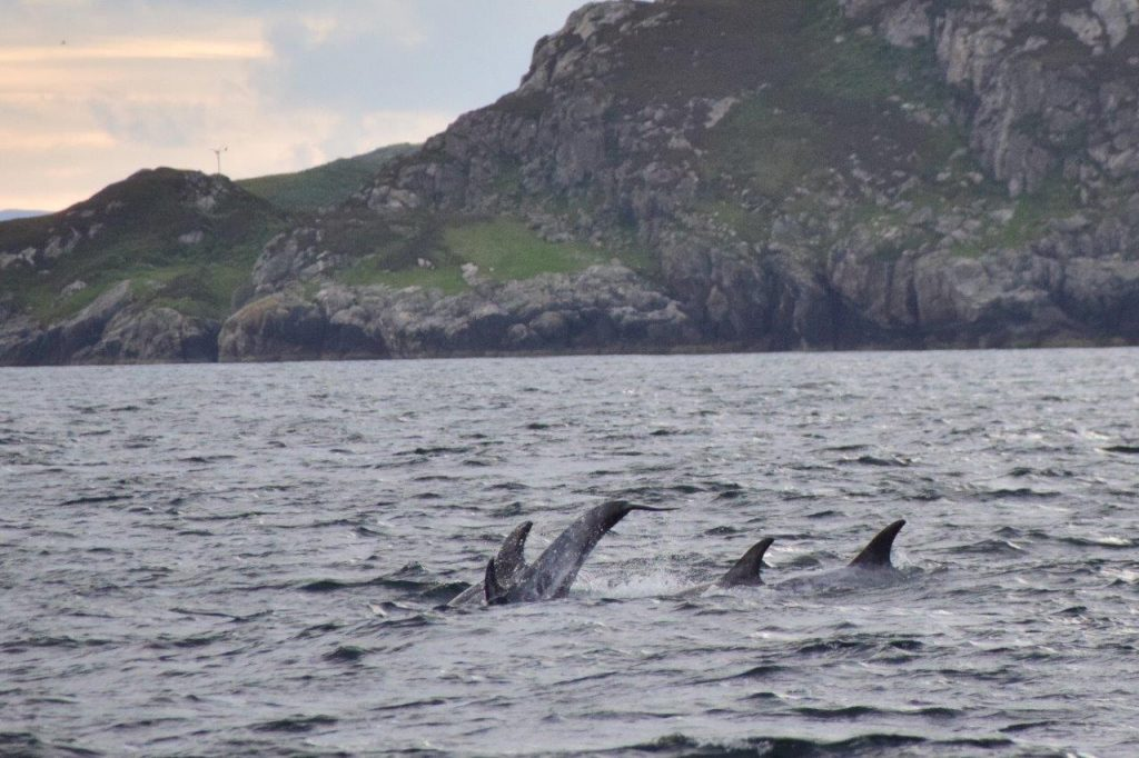 Dolphins of The Minch